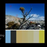 Sampling colours
